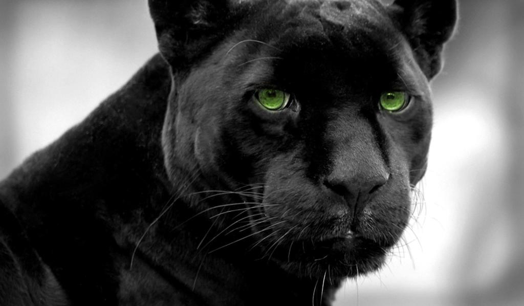 pantera-negra-4