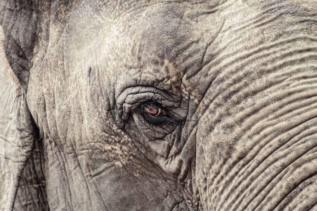 elephant-1599763_1280