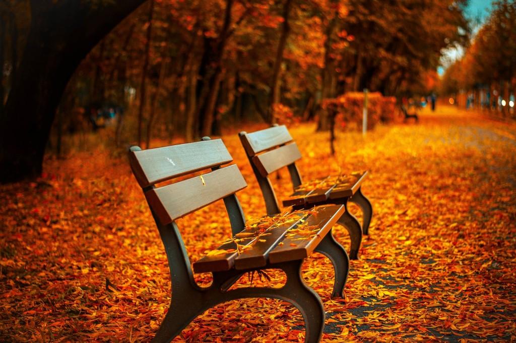 bench-560435_1920